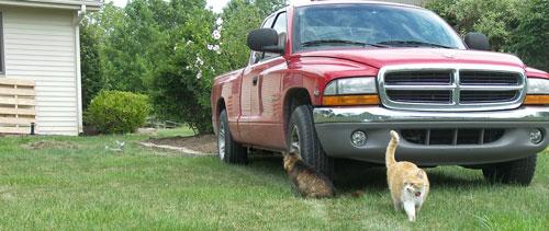cats_truck_500.jpg