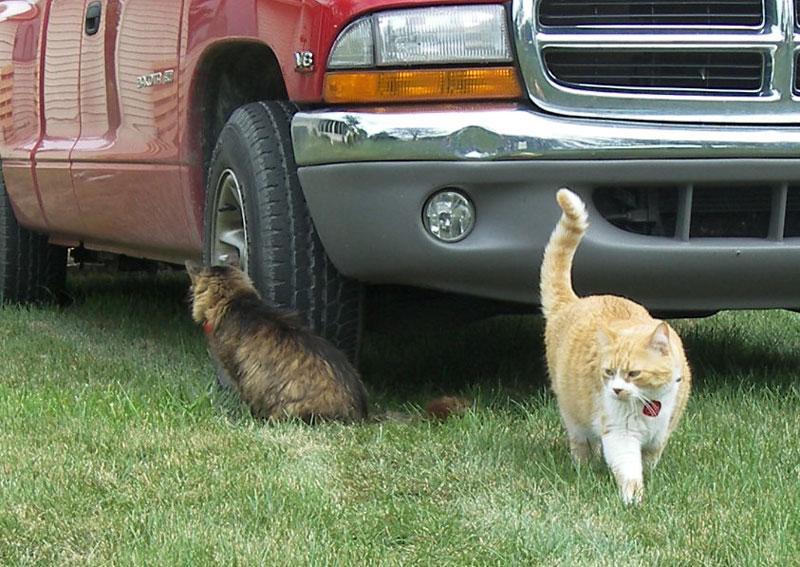 cats_truck_800.jpg