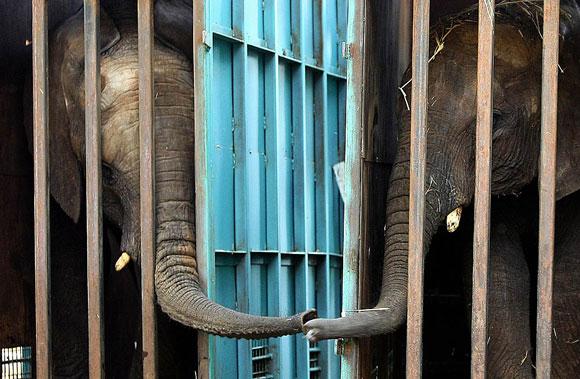 elephants580
